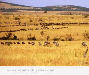 Early hominids grazed on grasslands