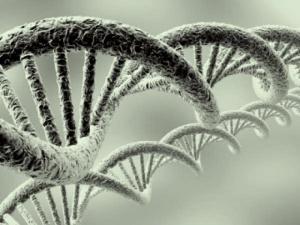 Relational genes
