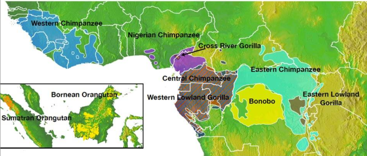 DIstribution of apes in Africa