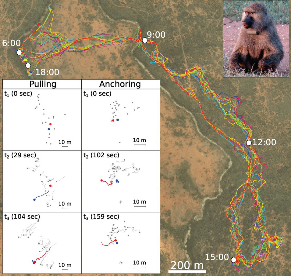 Baboon tracking