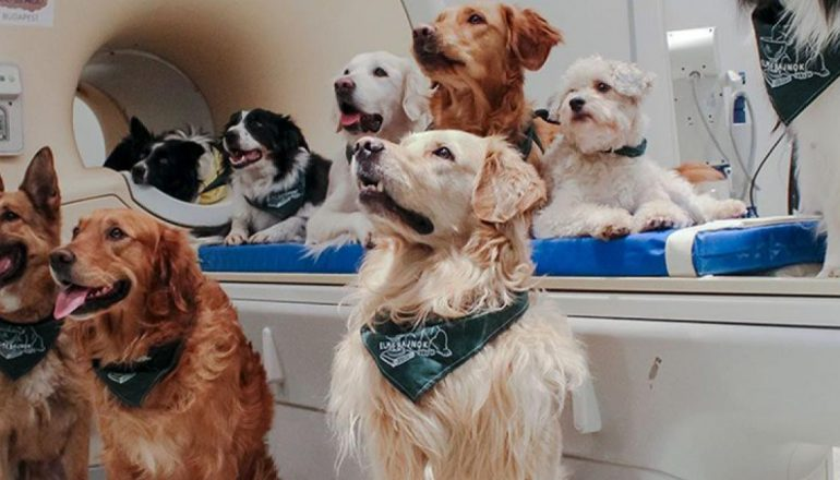Emotions in charge in dogs