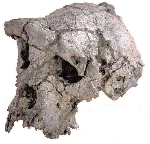 Oldest hominid fossil found in Sahara