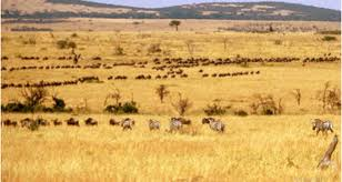 African climate 6 millions years ago