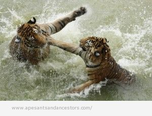 Freeze frame of animals fighting