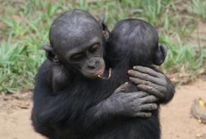 Bonobos don't do war