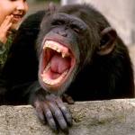Laughing gorilla
