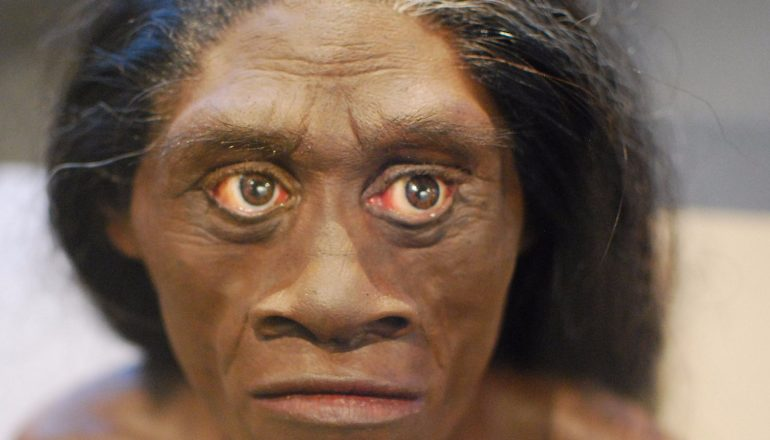 The Hobbits lived on the island of Flores for 700,000 yrs.