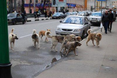 Ferral dogs